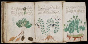 Pages du manuscrit Voynich