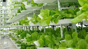 101182633-vertical-farm.530x298
