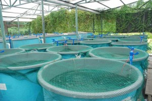 hope-aquaculture-eco-clean-fish-farms_277